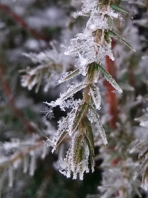 Frost  #photography  #life  #winter  #nature